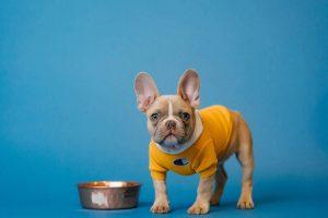 Grow Your Online Pet Supplies Business